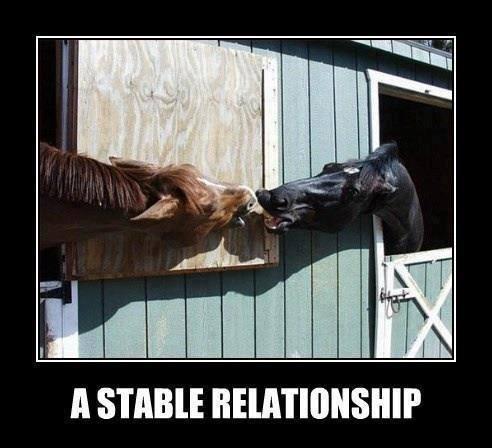 Humorous memes-stablerel.jpg